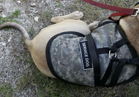 The Washington Free Beacon Working Dogs